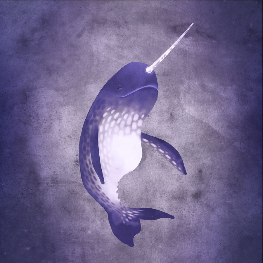 narwhal-web-copy